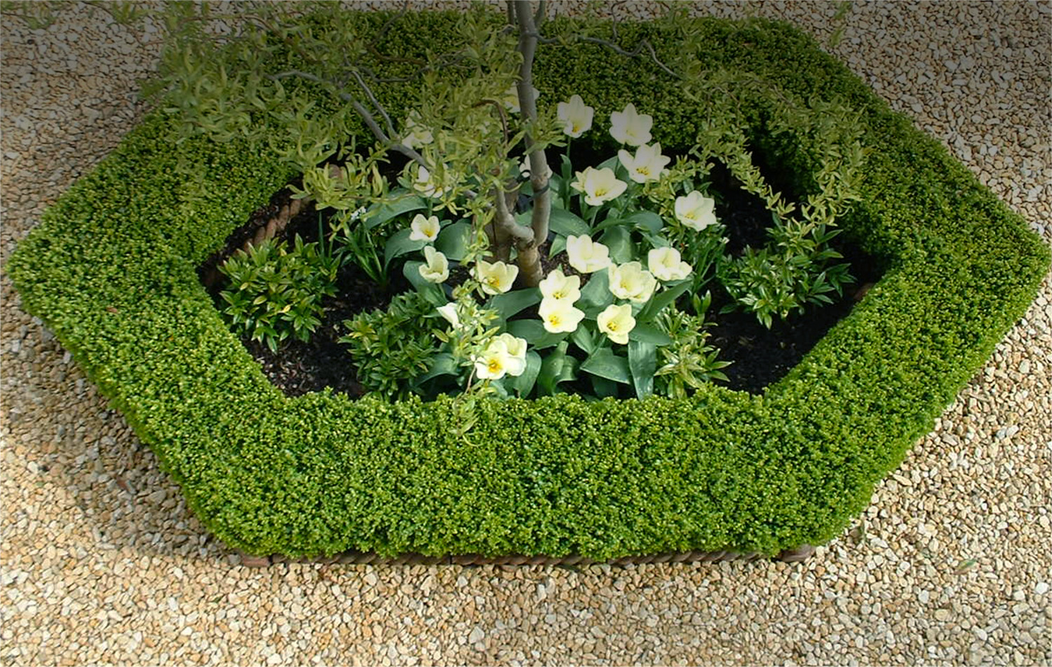 carol king is a garden designer based in guildford